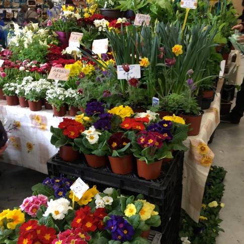 Beautiful flowers a the Farmer's Market