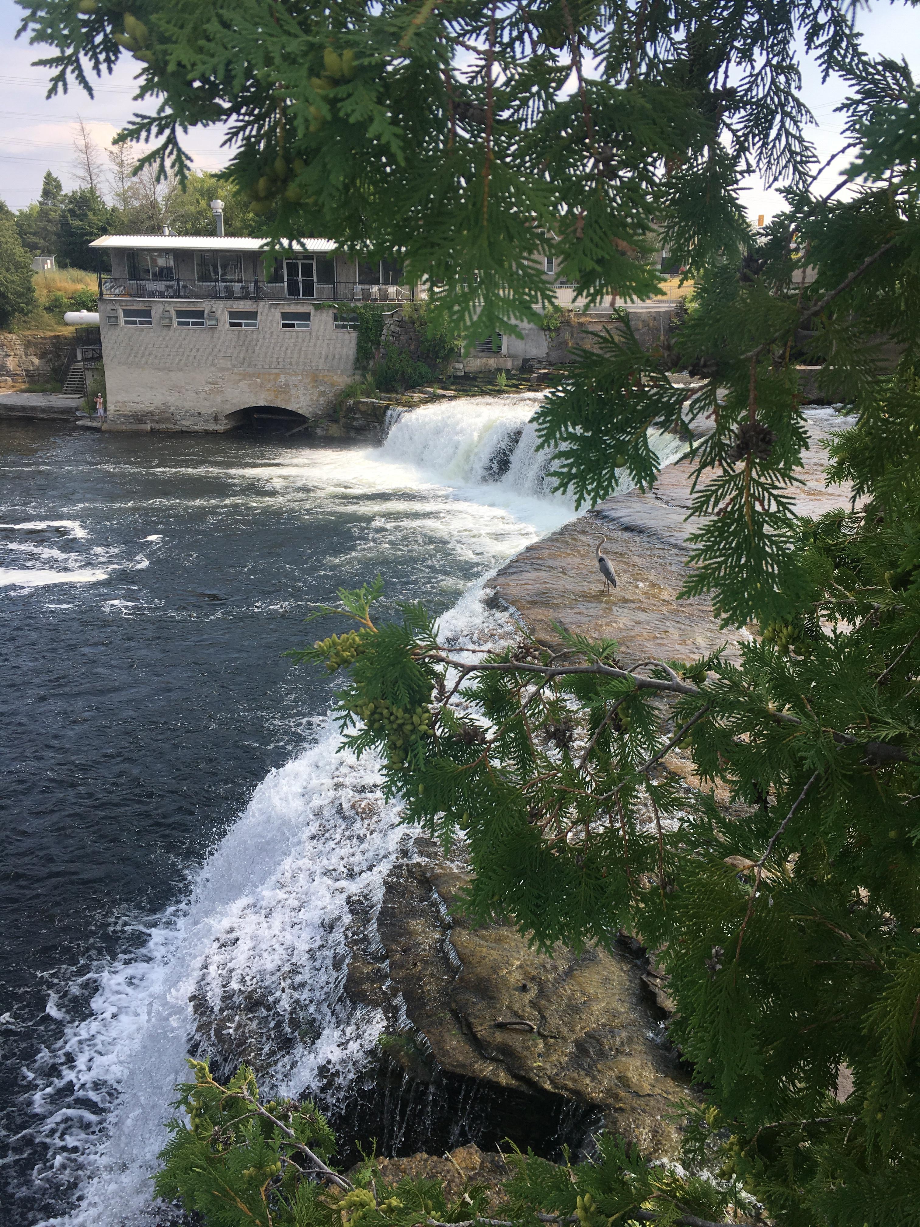 Fenelon Falls Waterfall and Blue Heron