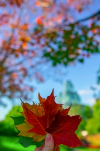 Changing leaves in Ottawa at Major's Hill park