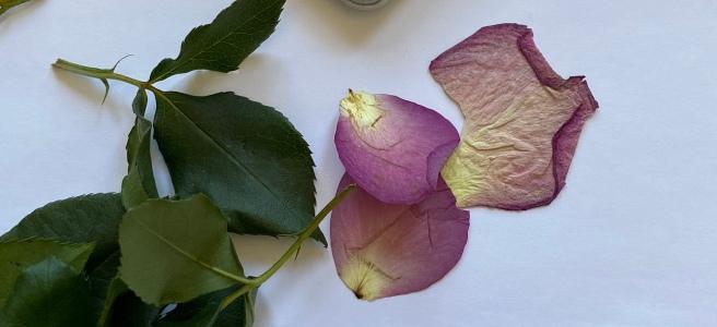 Do It Yourself DIY Flowers