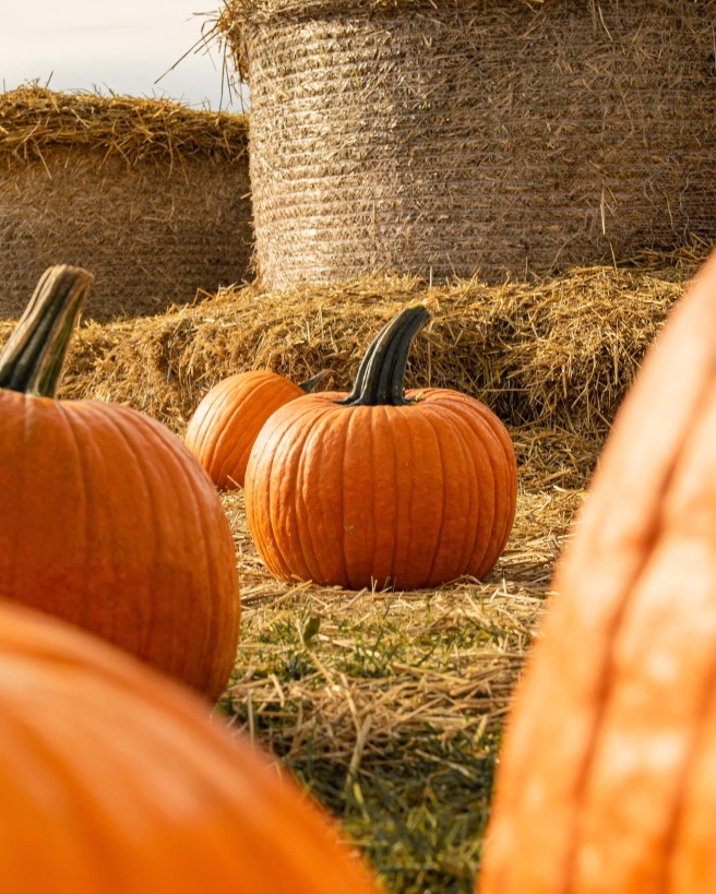 Ottawa Pumpkin Picking Miller's Farm and Market pumpking and hay bails