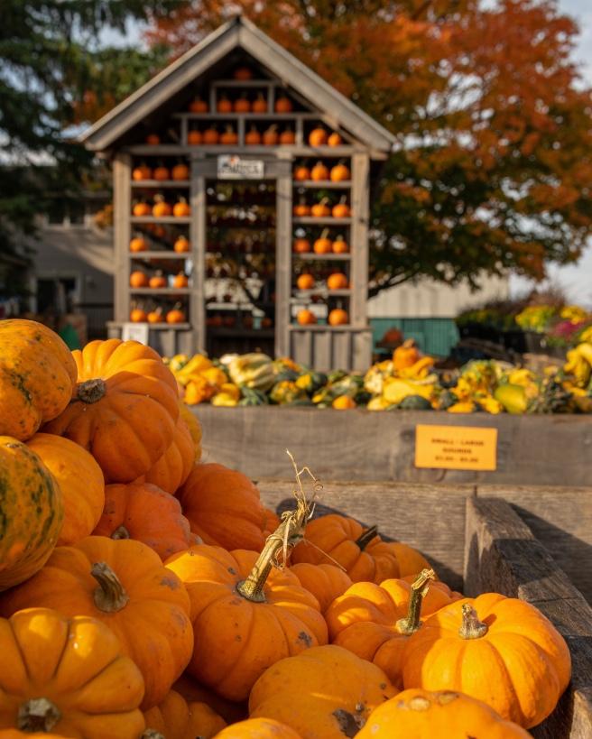 Ottawa's most photogenic pumpkin picking miller's farm and market