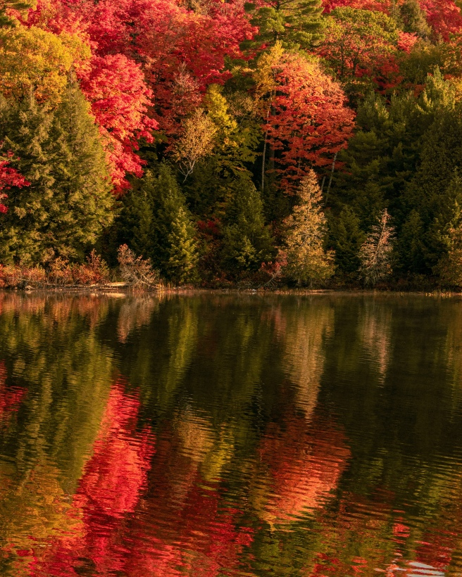 Reflection of red and green trees on the water on Meech Lake during fall