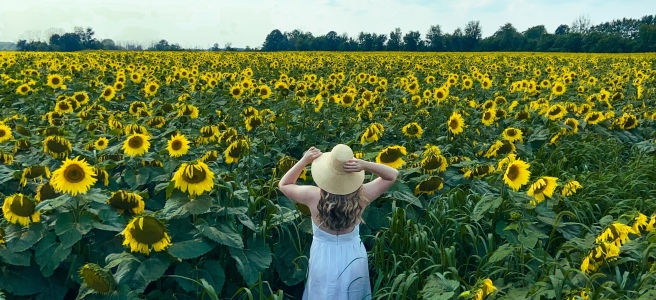 Woman in white dress and straw hat standing in a field of sunflowers
