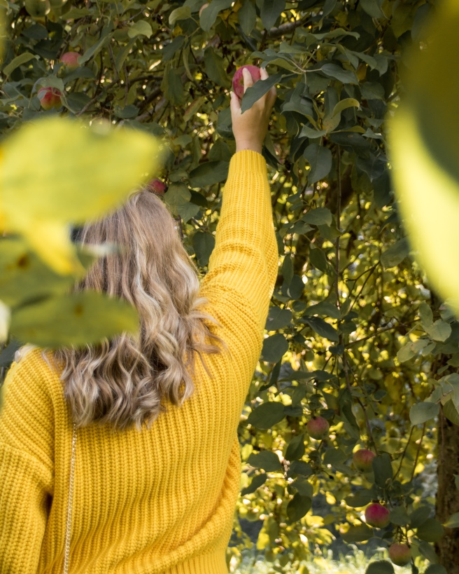 Woman wearing a yellow sweater reaching for an apple