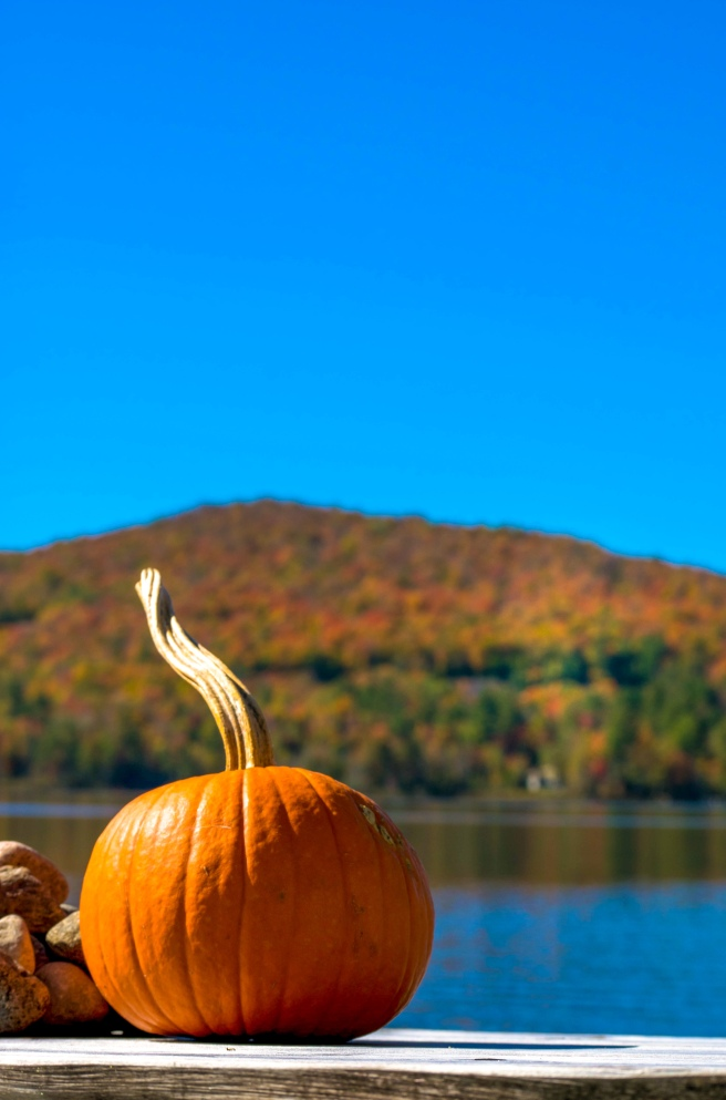 Orange pumpkin on a bench in front of a hill of fall foliage trees